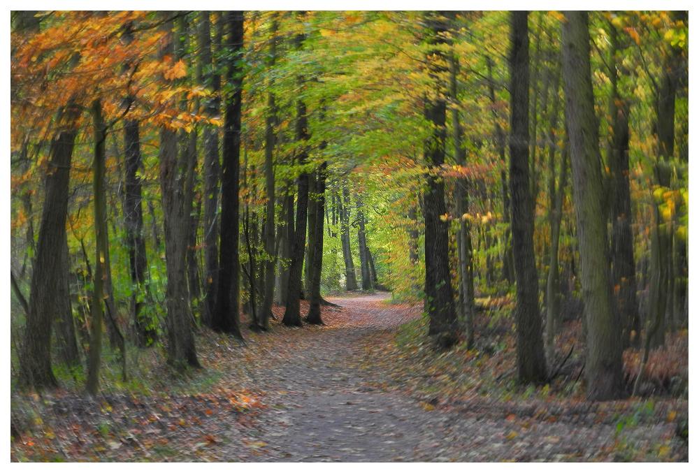 Malen mit der Kamera - Herbst