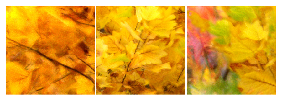 malen mit Licht - Herbst