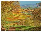 Maler Herbst 2