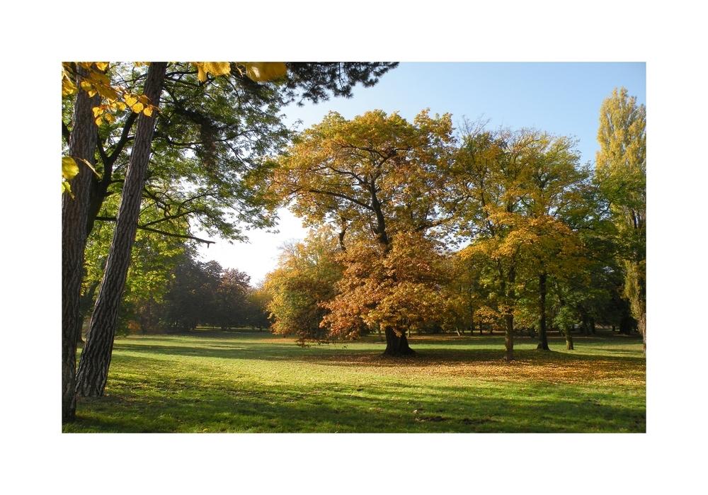 Maler Herbst (4)