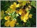 ... Maler Herbst ... von Otto Krb