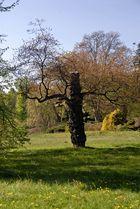 "Maler Herbst - Rotbuche im Naturschutzgebiet ""Klatzn"" bei Marienbad"