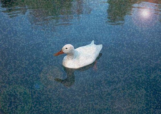 Malerische Ente