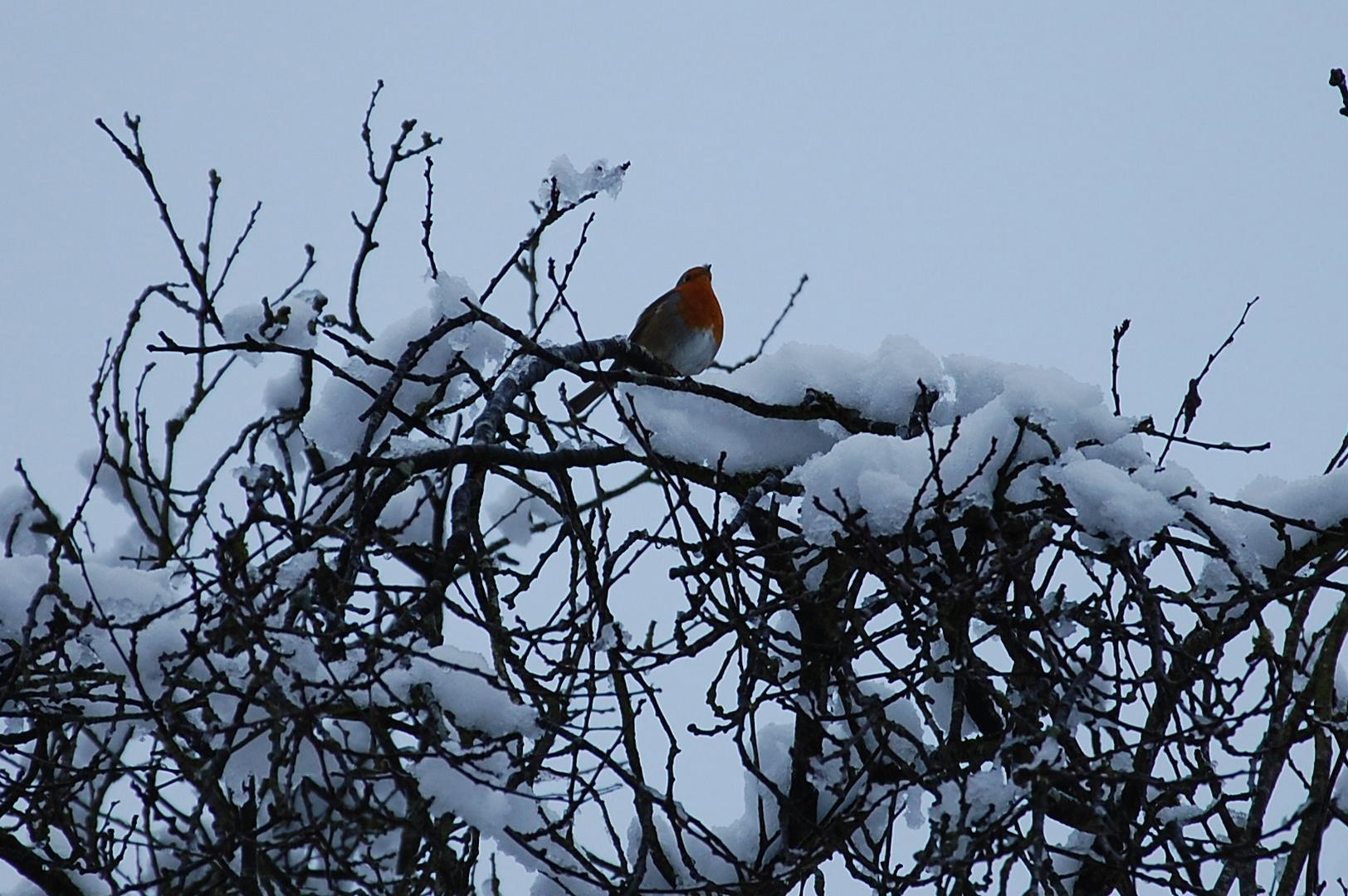 Malgré le froid et la neige, je chante à tue-tête