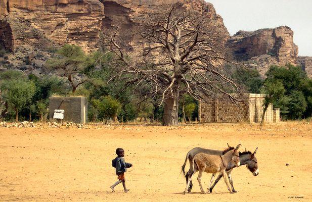 Mali Le retour des ânes