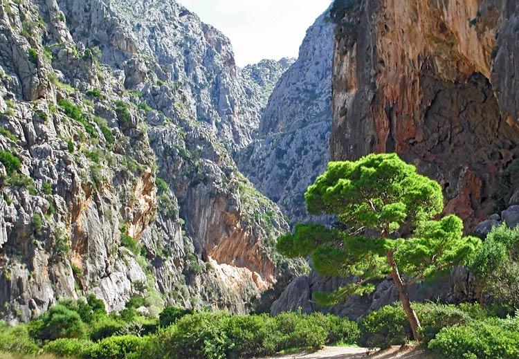 Mallorca 5