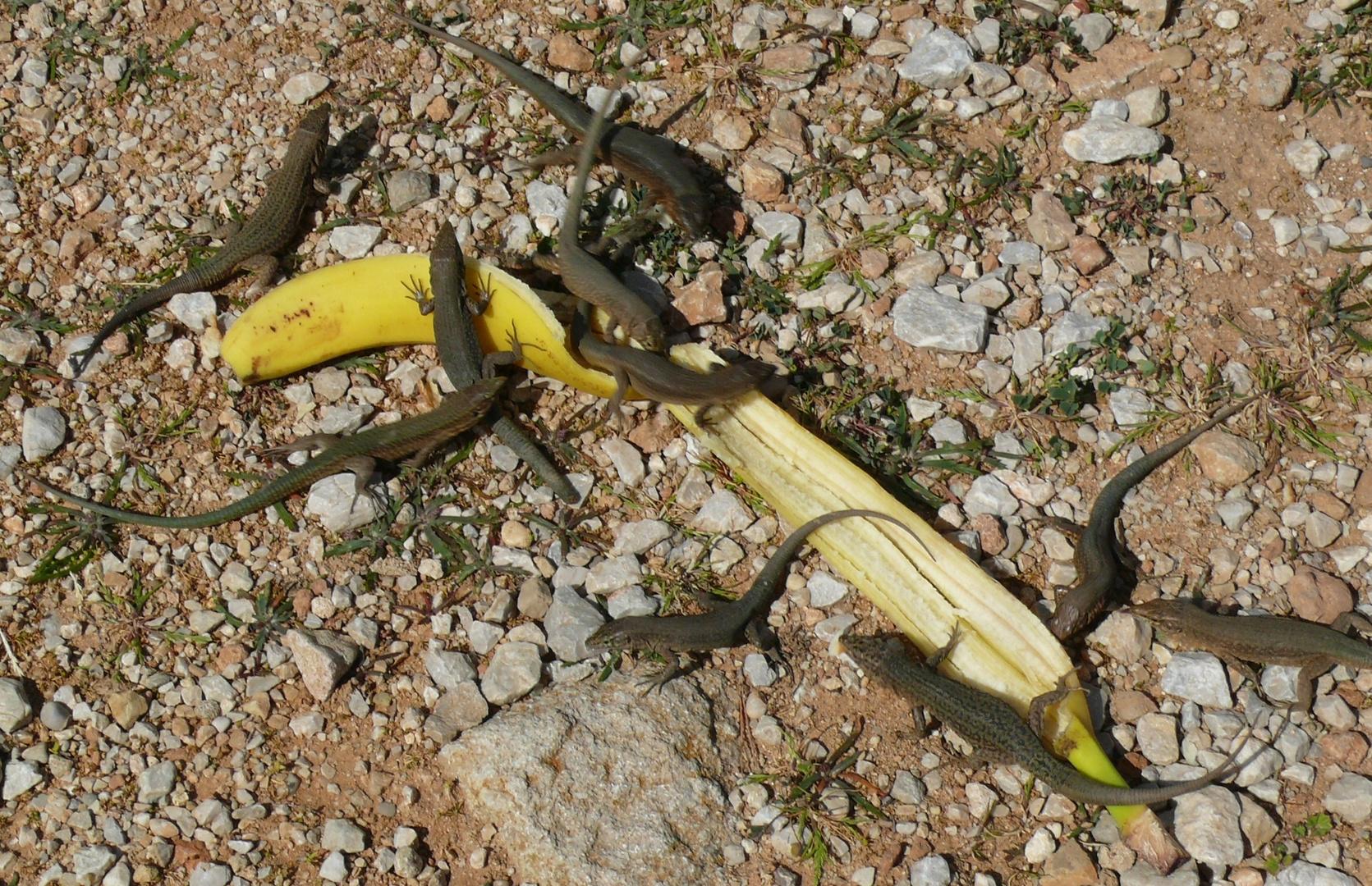 """Mallorca - """"Alles Banana ..."""""""