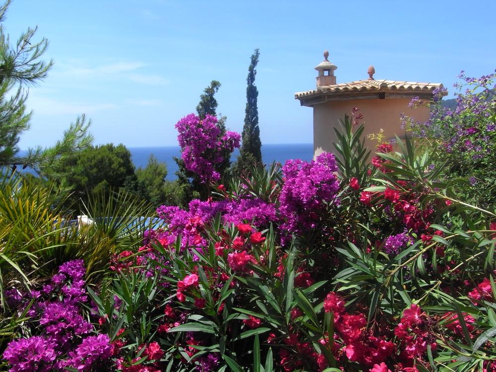 Mallorca blüht