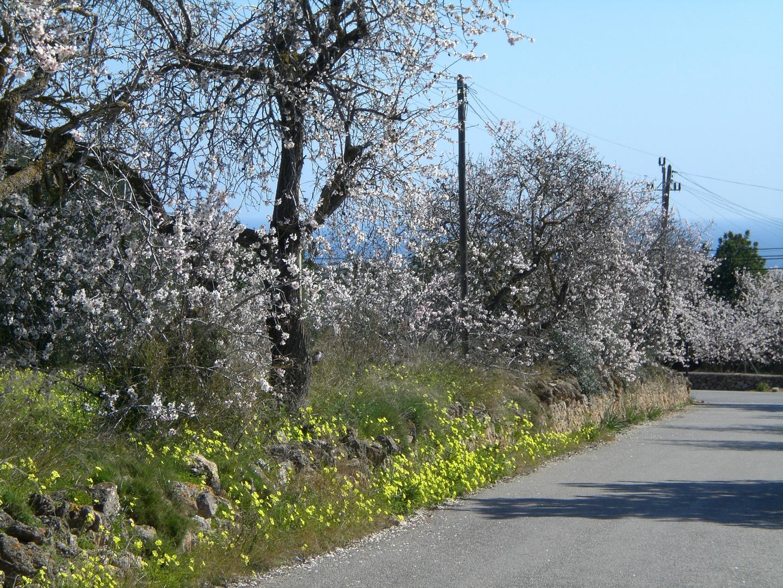 Mallorca en invierno