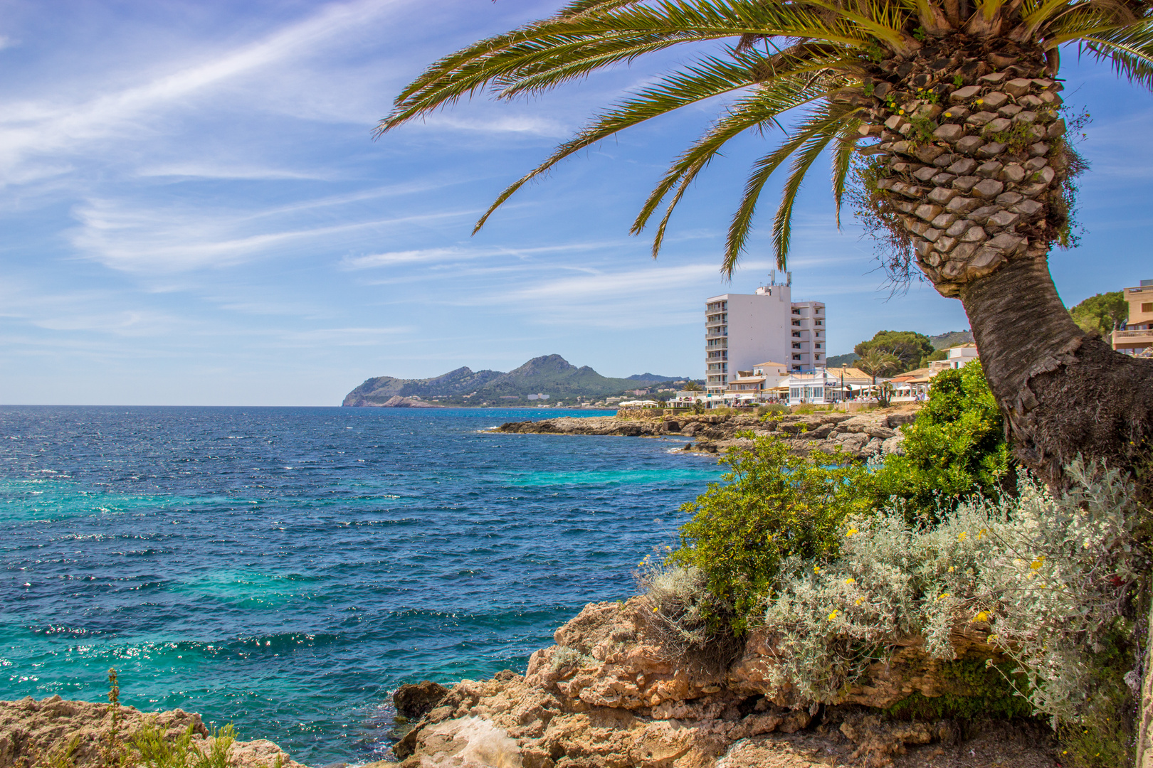 Mallorca Palme bei Sonnenschein