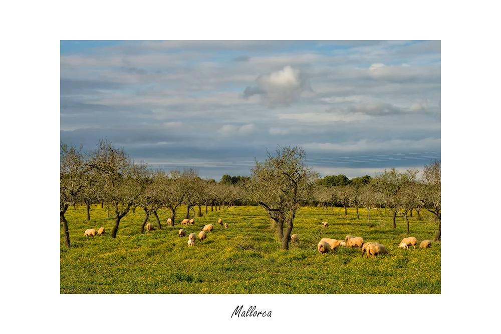 ~Mallorca-Romantik im Januar~
