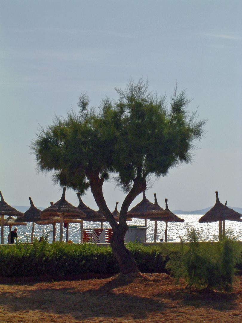 Mallorca VII
