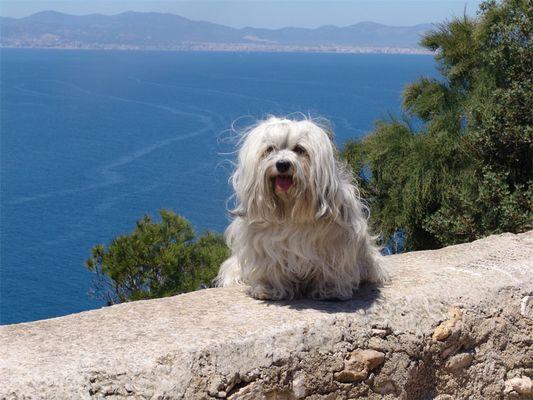 Mallorcaträume