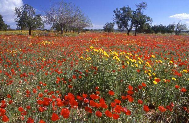 mallorquinischer Frühling