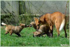 Mama Agura und ihre Jungs