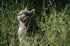 Mama gato al sol