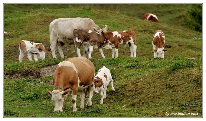 Mama Kuh hat Nachwuchs