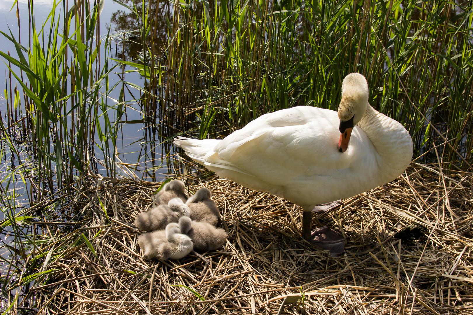 Mama mit Kinder