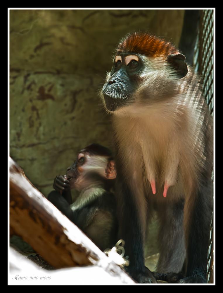 Mama niño mono