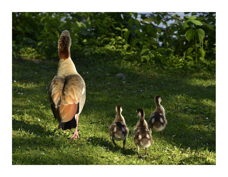 Mama und die Kleinen