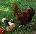 Mama und ihre Kleinen