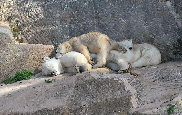 Mamaaaaa, bist Du schon wach????.....