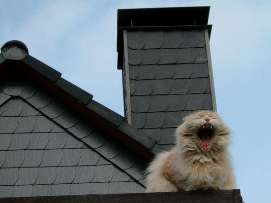 Mamaaaaa! Hilfe, ich will runter hier!