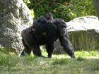 Maman Chimpanzée et son bébé