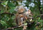Maman d'ècureuil