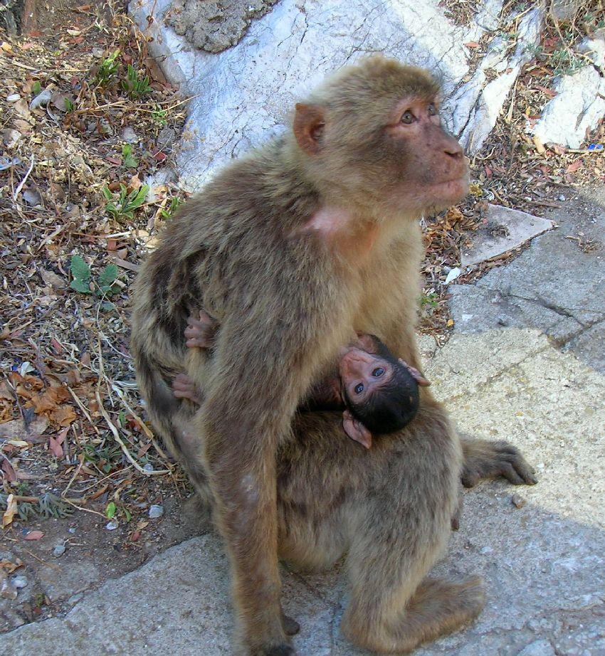 Maman et son petit
