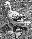 Maman huppée et ses enfants...
