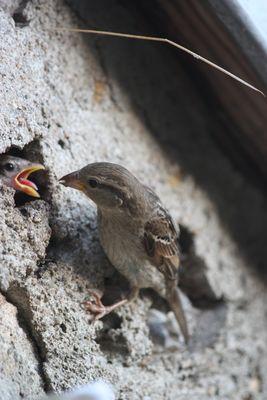 maman oiseaux
