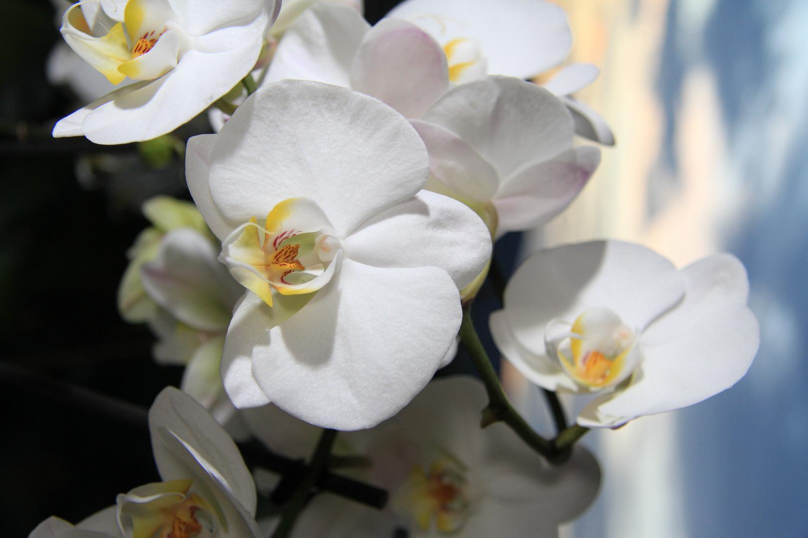 Mama´s Blumen ;)