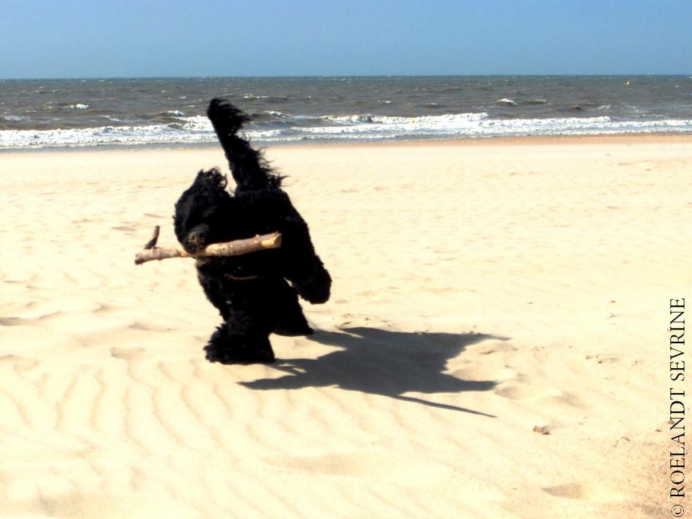 Mambo à la plage