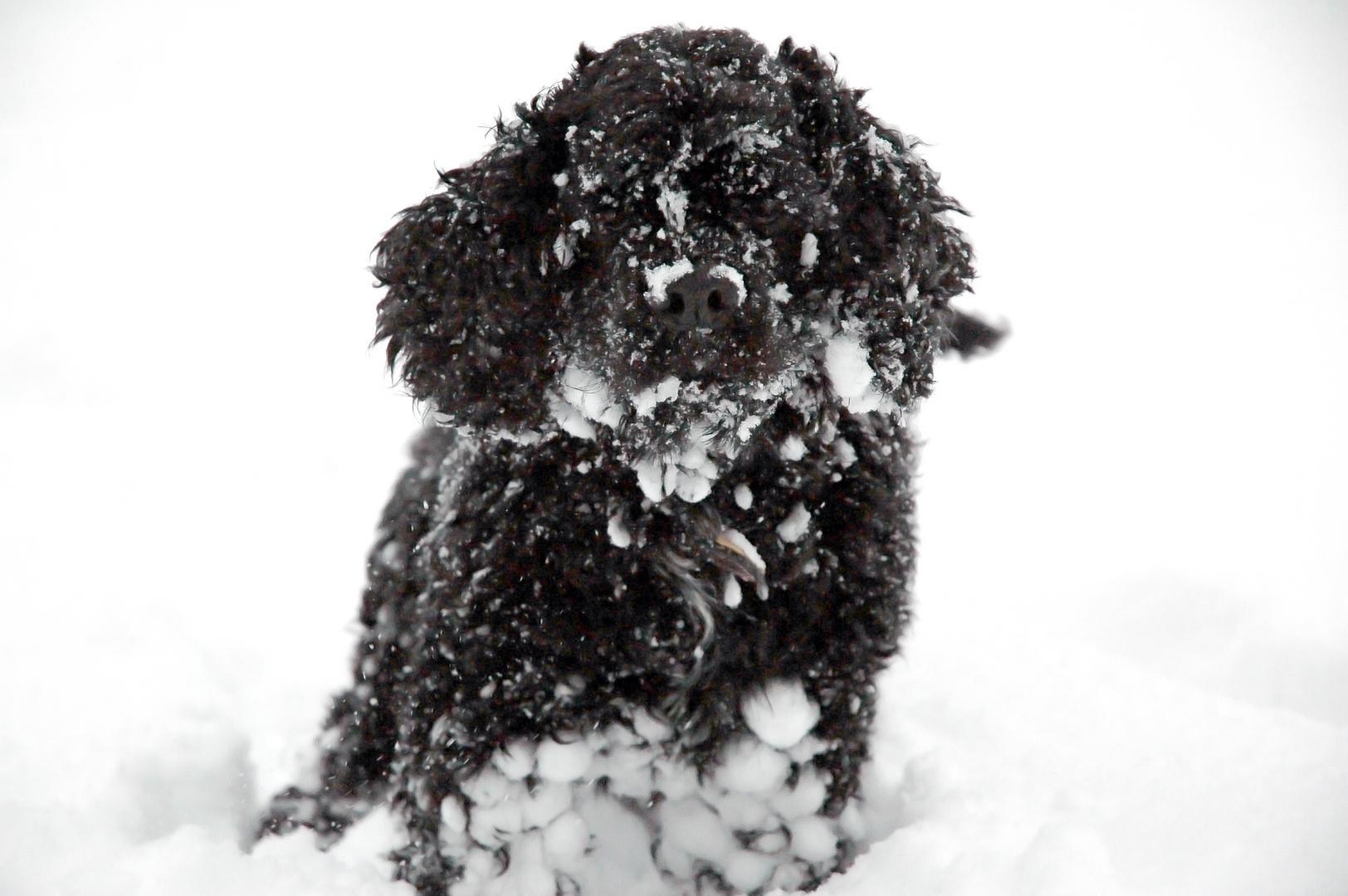 Mambo et la neige toute une hitoire.....