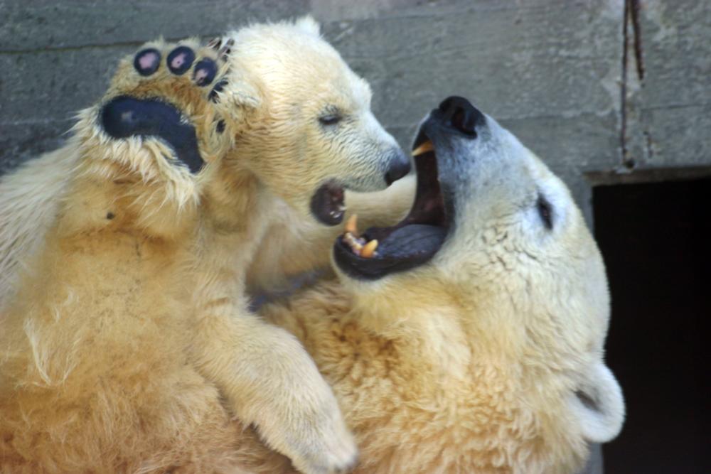 Mamma orso con il suo piccolo