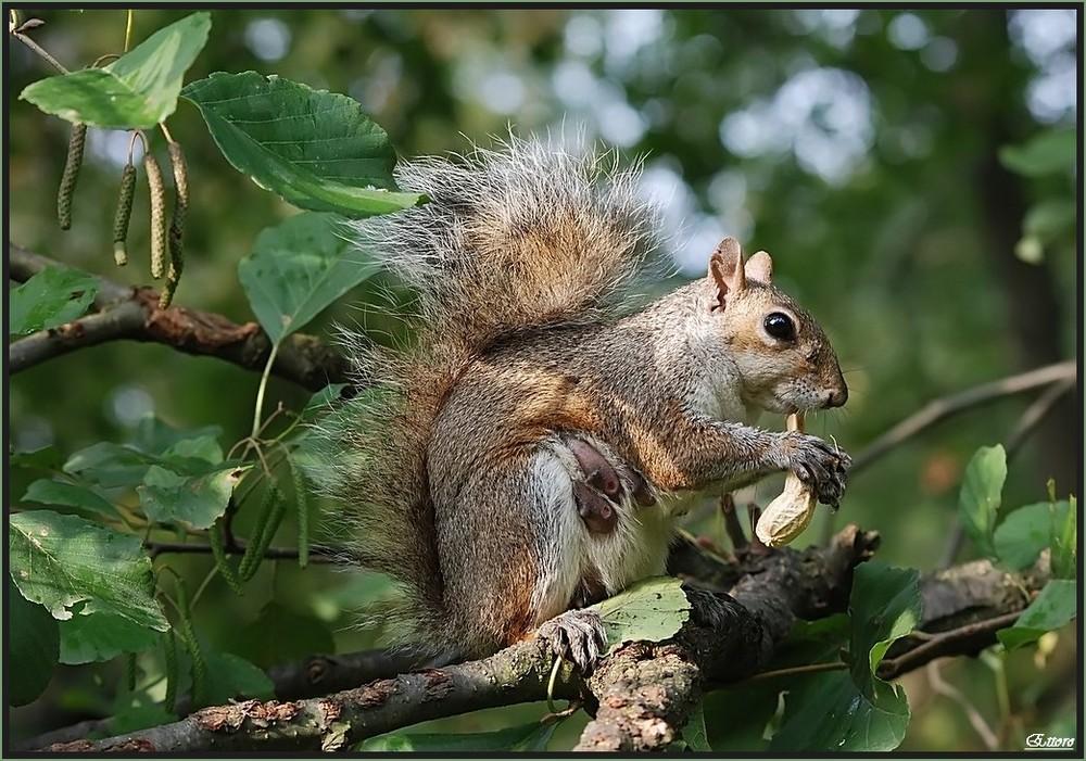 Mamma scoiattolo