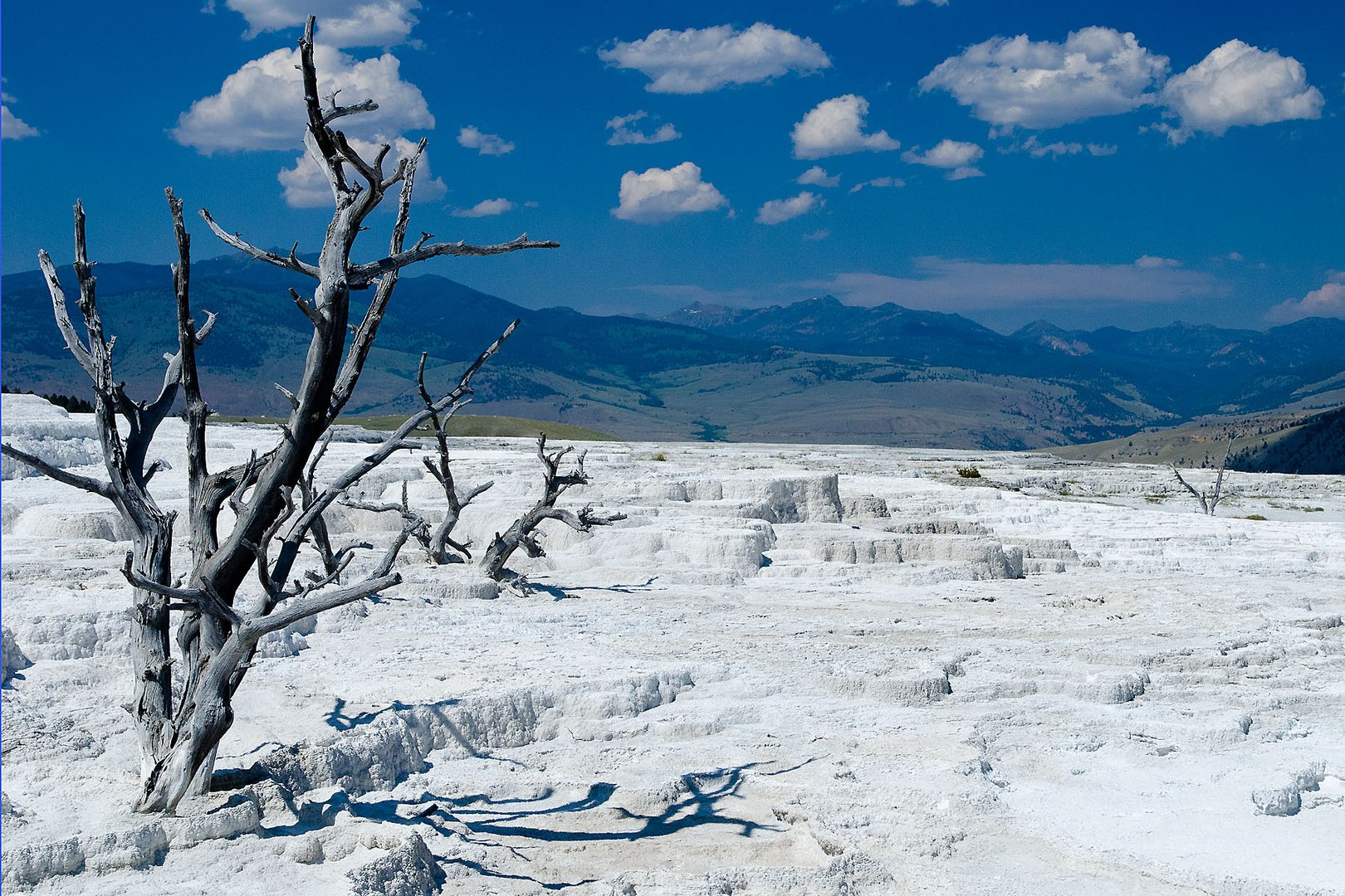 Mammoth Hot Springs (2)