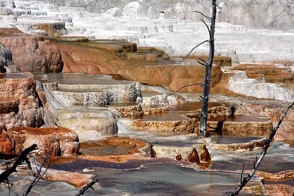 Mammoth Hot Springs - Upper Terraces