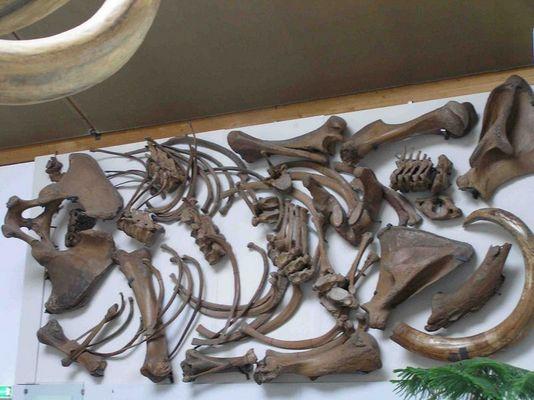 Mammut Knochenhaufen