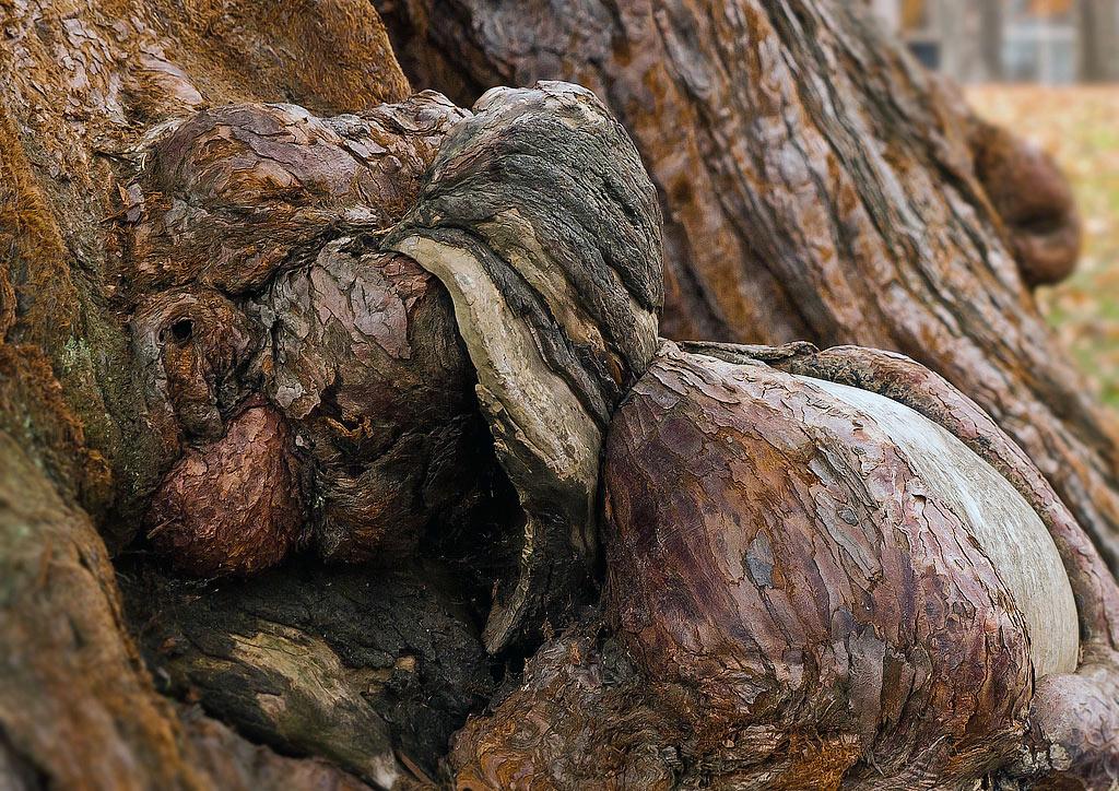 Mammutbaum Gmunden Toscanapark