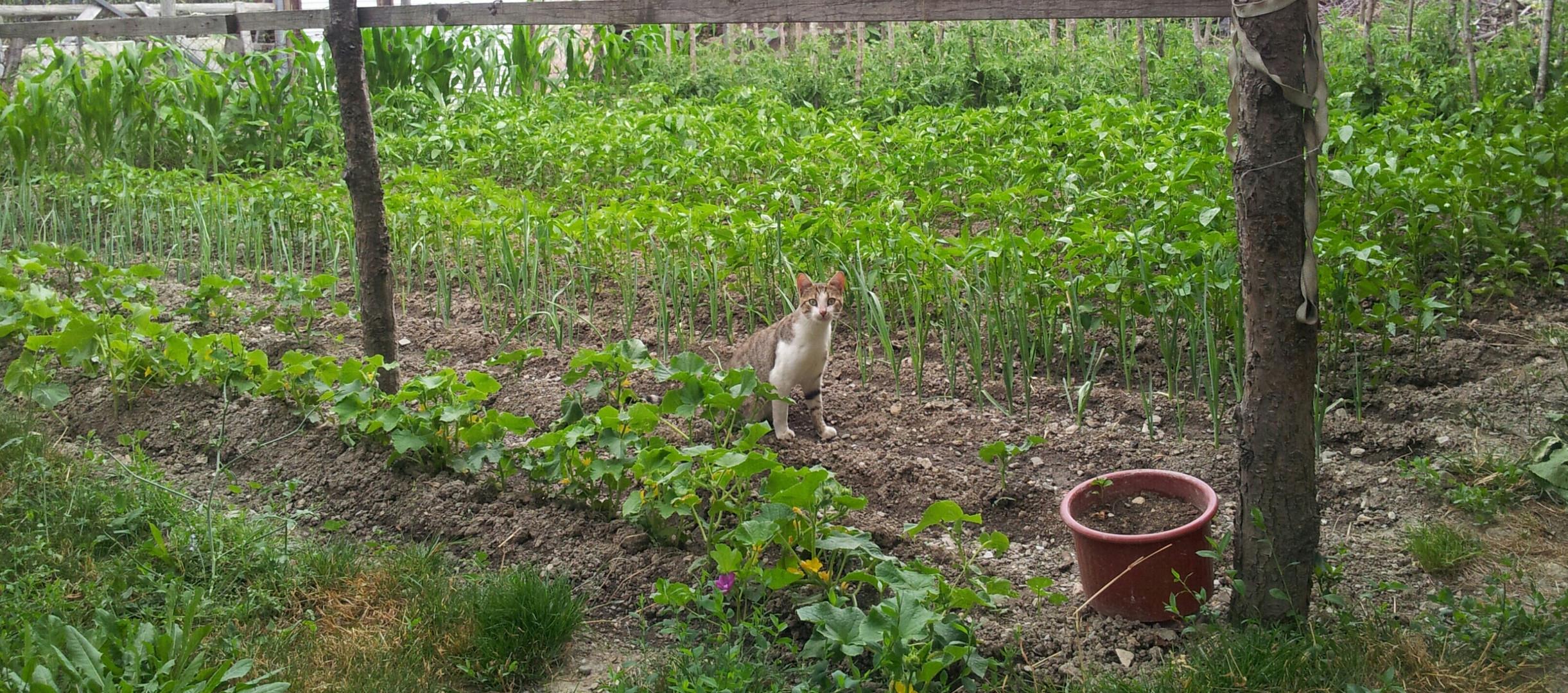 Mam's kleiner Garten :)