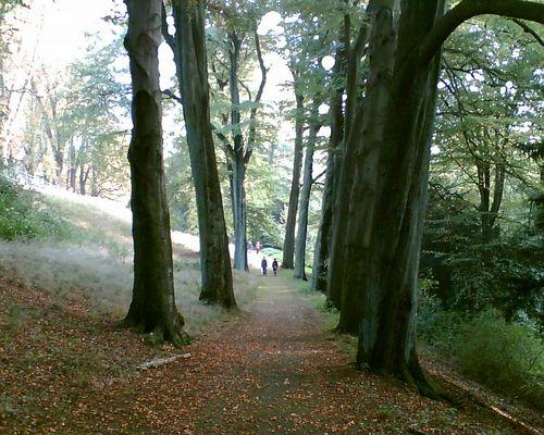 man achte auf die Proportion Mensch Wald