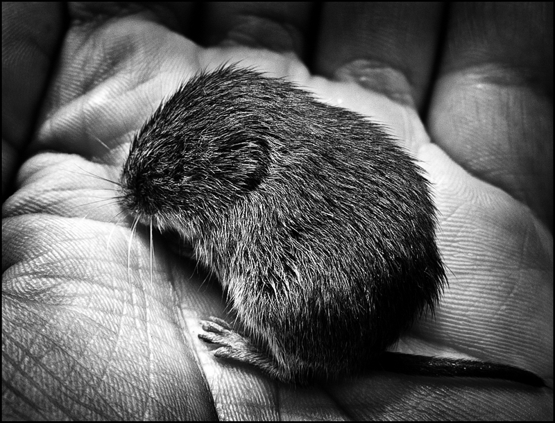 Man and Mouse