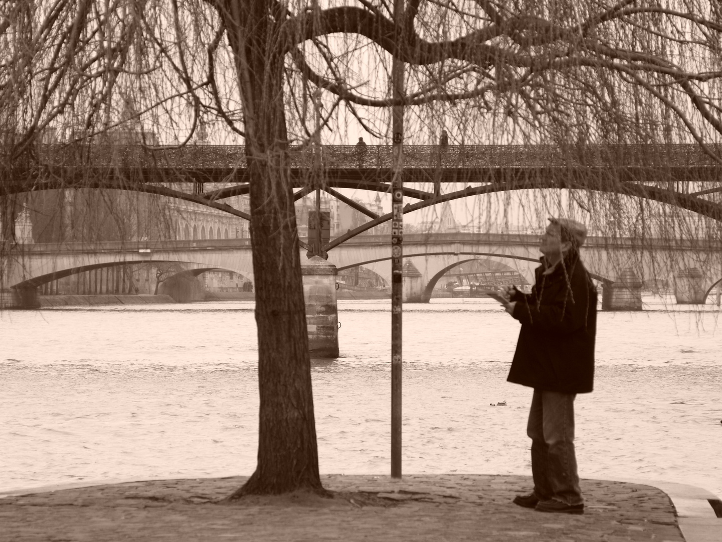 Man Drawing a Tree in Paris