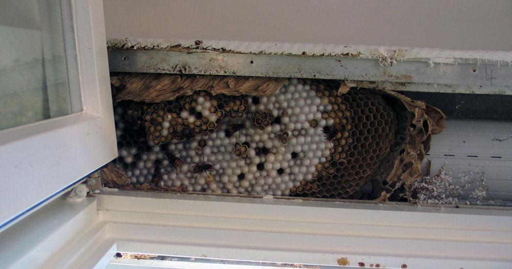 man kann auch im rollladenkasten wohnen foto bild tiere wildlife insekten bilder auf. Black Bedroom Furniture Sets. Home Design Ideas