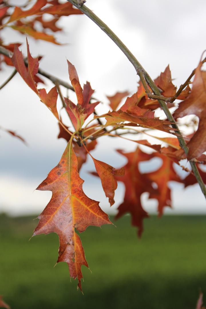Man sieht, das es Herbst wird!!