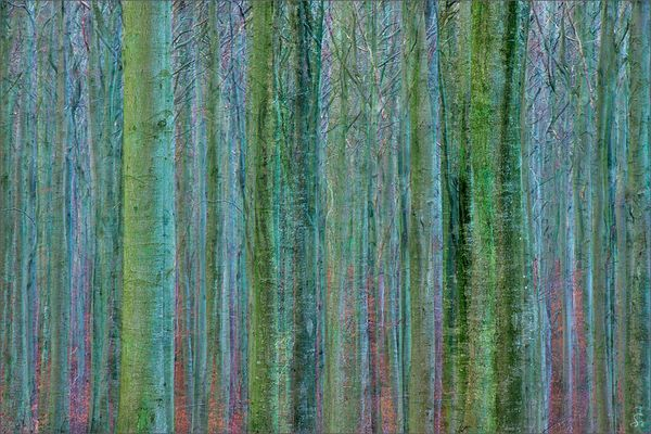 Man sieht den Wald vor lauter Bäumen nicht ...
