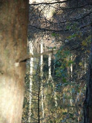 Man sieht den Wald vor lauter Bäumen nicht