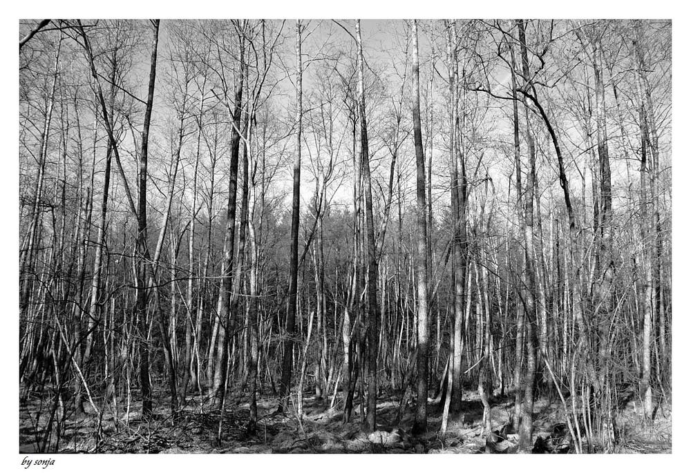 Man sieht den Wald vor lauter Bäumen nicht.